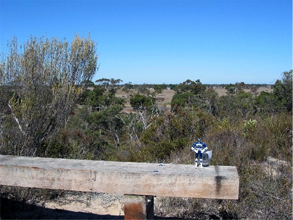 Lucky Blue Power Ranger standing in Kelvin Powrie Reserve waiting for some nice tourists to come along and give him a lift back to America.